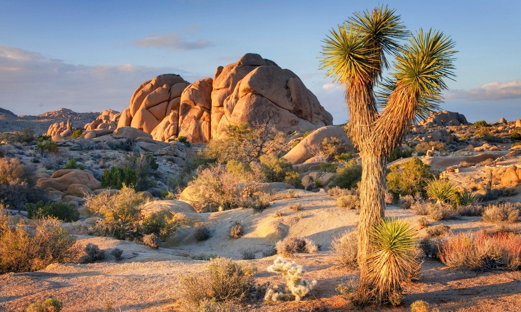Vacation rentals in Joshua Tree