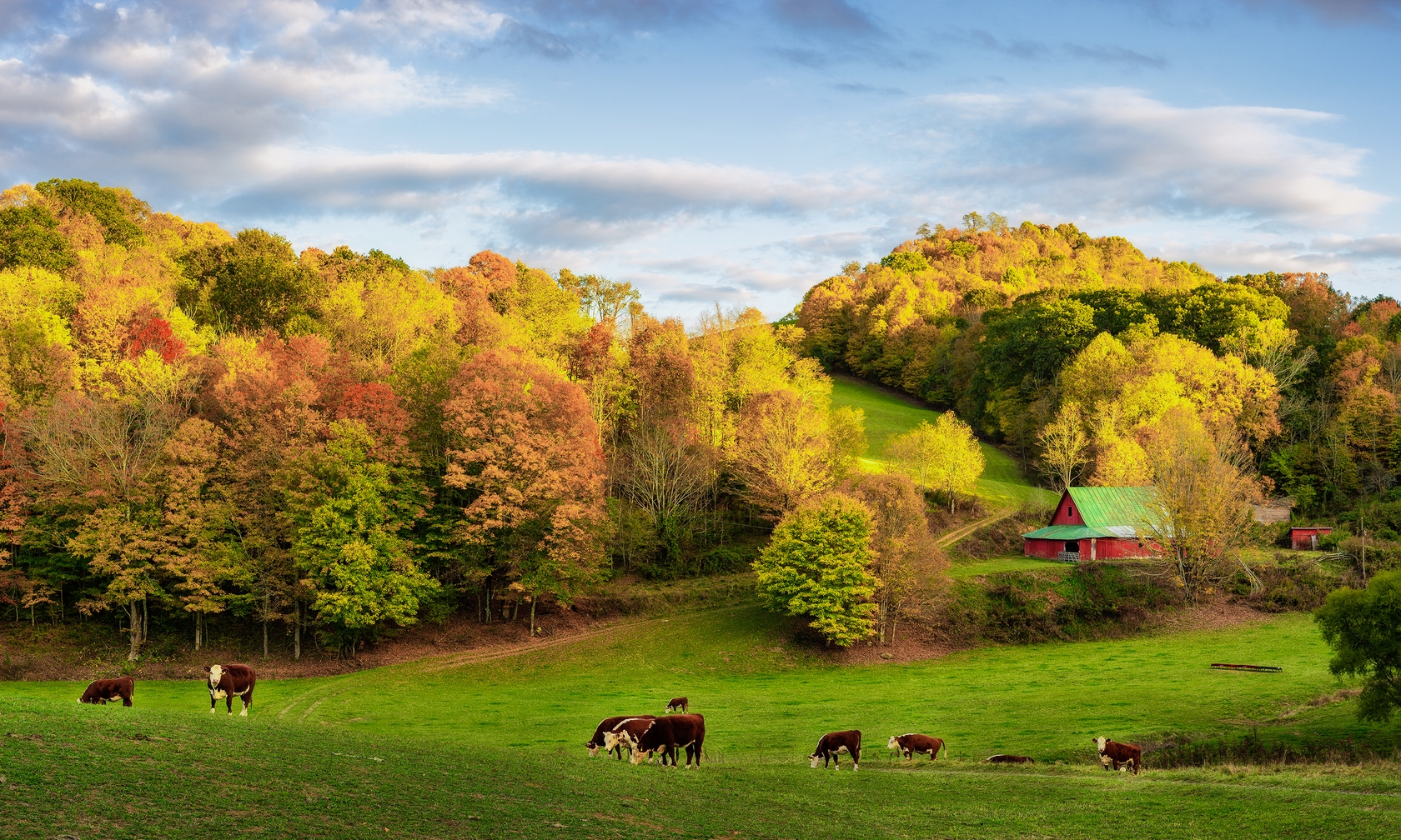 Cabin and house rentals in Boone