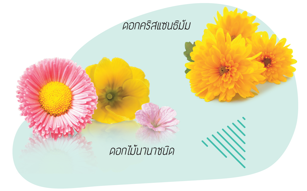 Beauty_Apr47-12.png