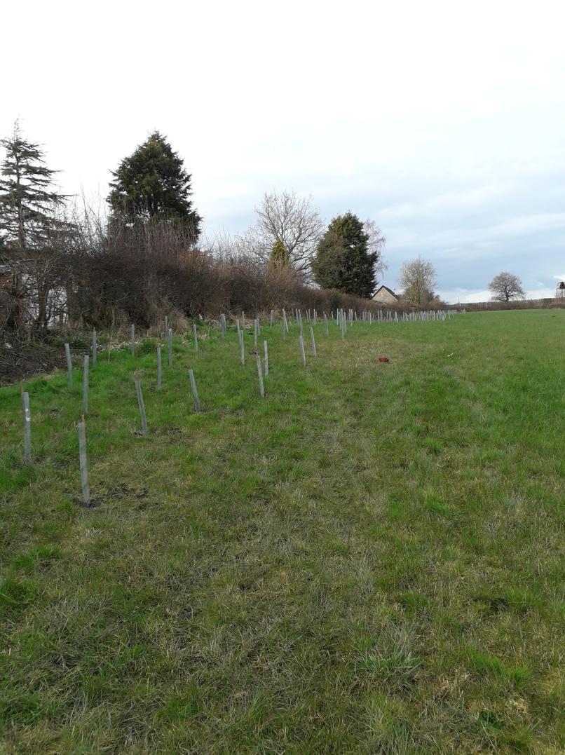 tree_field.png