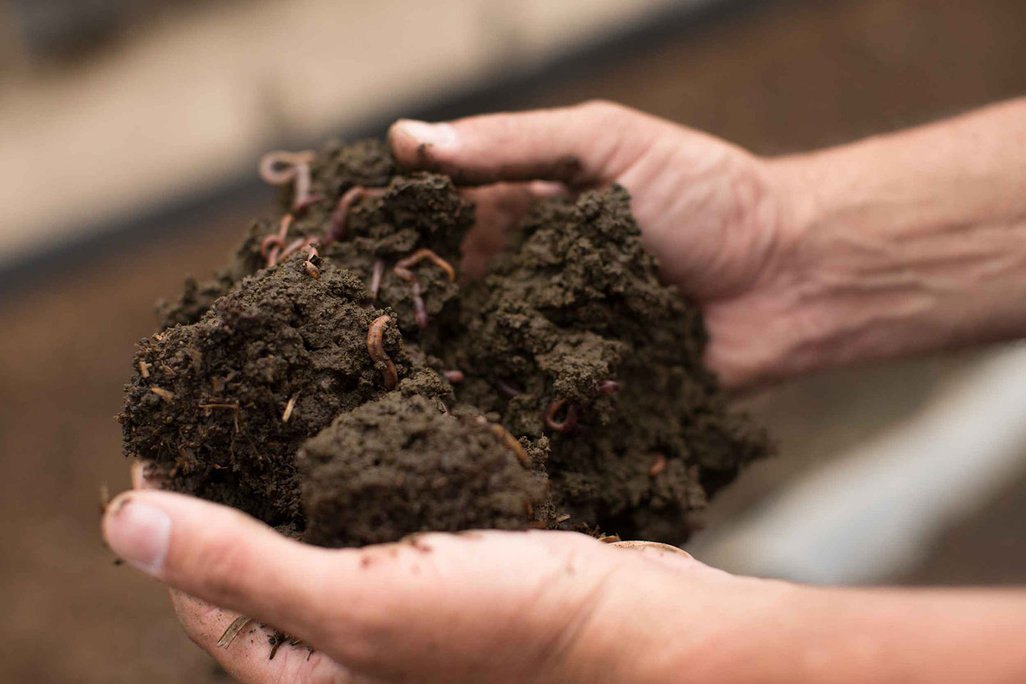 Mexico Farm: Worms at Work