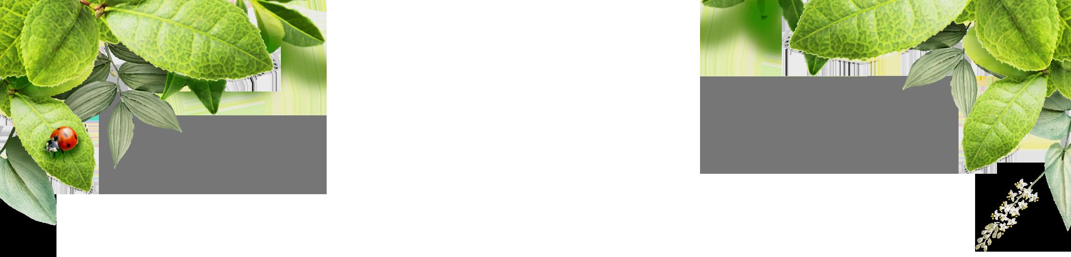 Allplant-450g-bg.png