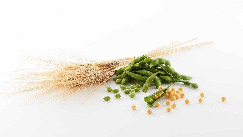 nutrilite-making-protein-powder-tasty-excerpt.jpg