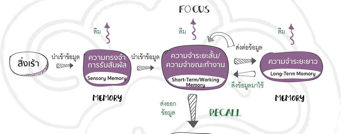 เสริมความจำ บำรุงสุขภาพสมอง