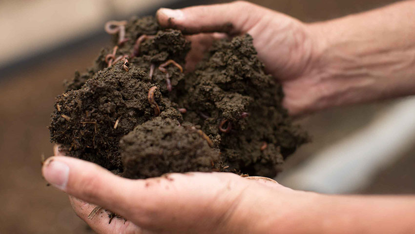 nutrilite-worms-at-our-organic-farm-in-mexico-excerpt.jpg