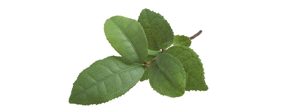 ชาเขียว - สุขภาพหัวใจ