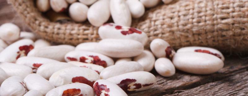 สารสกัดจากถั่วขาวมีส่วนช่วยควบคุมและลดน้ำหนักอย่างไร?