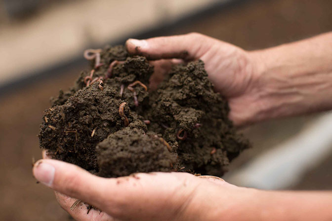 2. PLOUGHING SOIL WITH EARTHWORMS
