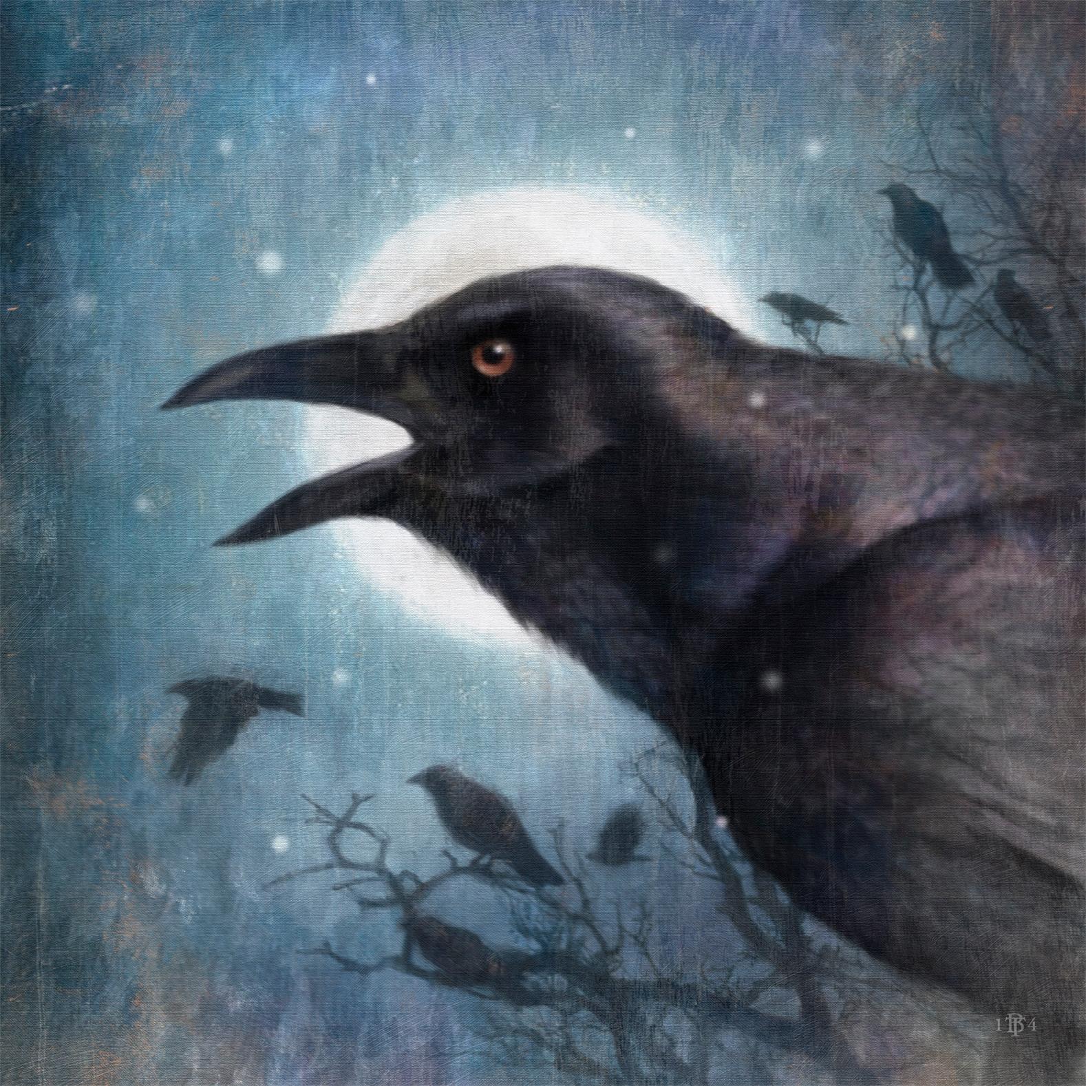 crowLrg1.jpg