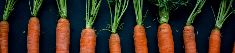 Header Carrots