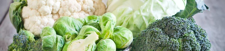 Header winterNUT food vegetables