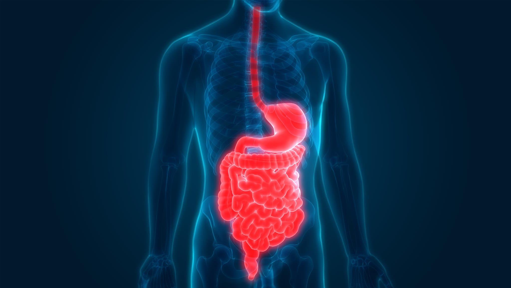 Header DigestiveTract