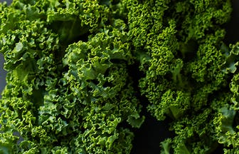 Header Kale