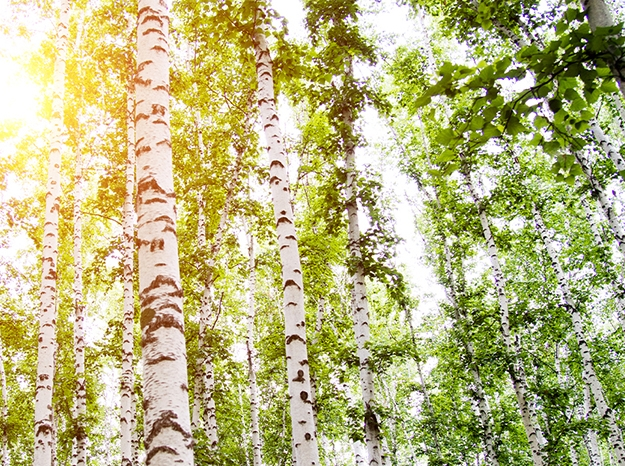 a grove of trees in the sun