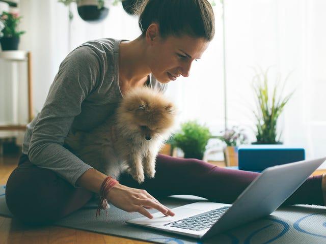 Jeune femme apprenant une langue en autonomie depuis chez elle en compagnie de son chien.jpeg