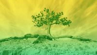 Investir em Fundos Com Consciência Climática: Um Olhar Sobre os Produtos