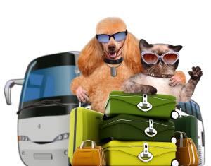 Unified Communications: Pet Transporation