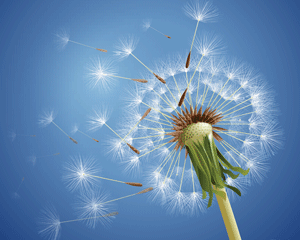 call center software: dandelion