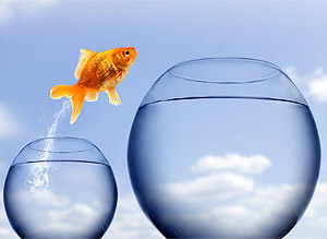 Business VoIP: Fish jumping to bigger bowl