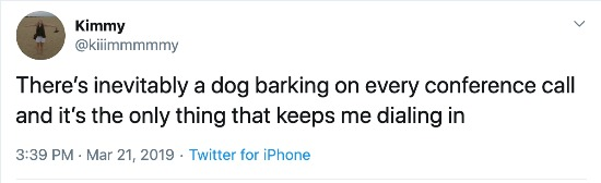Dog barking during conference call tweet
