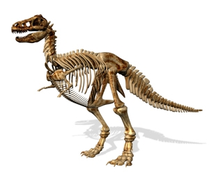 Is your PBX a dinosaur? Get VoIP Business Phone Service.