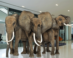 Business phone service compliance: elephant herd