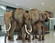 elephant_300x240-220x175.png