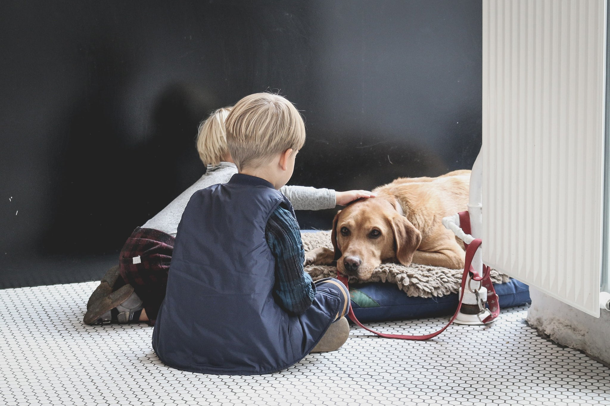 Helping Children Cope When the Family Dog Has Cancer