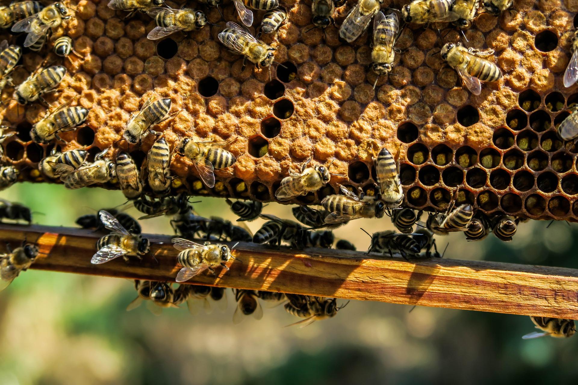 apiary-1867537_1920.jpg