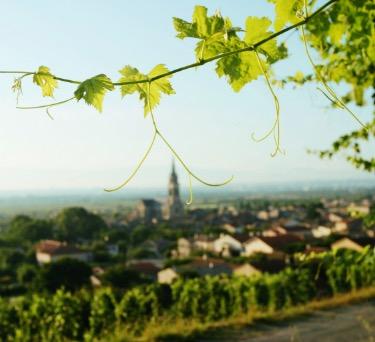 Growing up in Burgundy