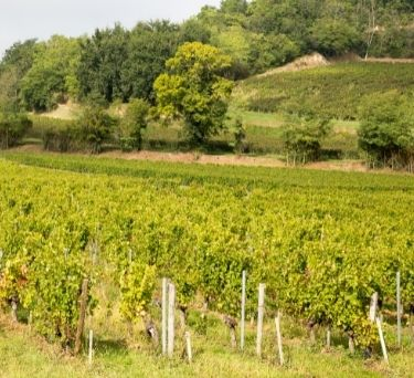 French Wine Guide