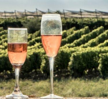 Portuguese Wine Guide