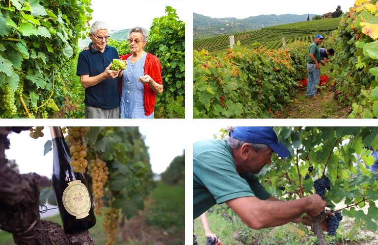 wi-blog-guide-to-moscato-in-article-1.jpg