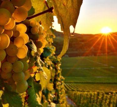 Austrian Wine Guide