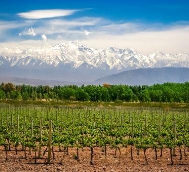 Argentina Wine Guide