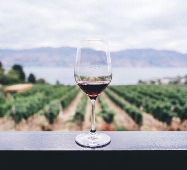 8 Wine Tips for Beginners