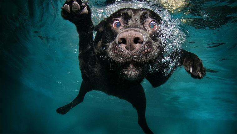 blog-ado-schwimmen-hund.jpg