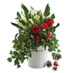 201112-FlowersPlants-HolidayGardenParty-Siloed.jpg