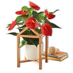 201214-Christmas-Flowers&Plants-Silo.jpg