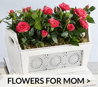 FlowersForMomBlock_m.jpg