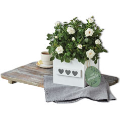 210119-HD-Flowers&Plants-DeptPg-Roses-Siloed.jpg