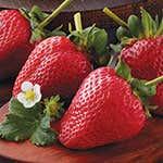 210408-StrawberriesThumb150x150.jpg