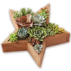 200730-Star-Succulents.jpg
