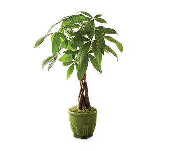 m_200403-HD-Flowers-Plants-Trees-Silo-_m.png