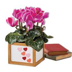 ValentinesDay-FlowersPlants.jpg