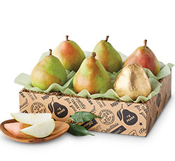 silo_pears_shopbycat_sbc.jpg