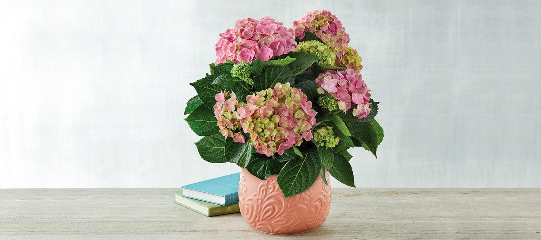 200421-Mothers-Day-Pink-Hydrangea.jpg