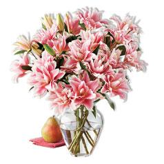 210503-HD-Flowers&Plants-Roselily-Silo.jpg