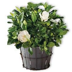 200430-Flowers-Plants-Garden-Silo.jpg