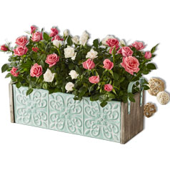 Flowers&Plants-Roses-Siloed.jpg